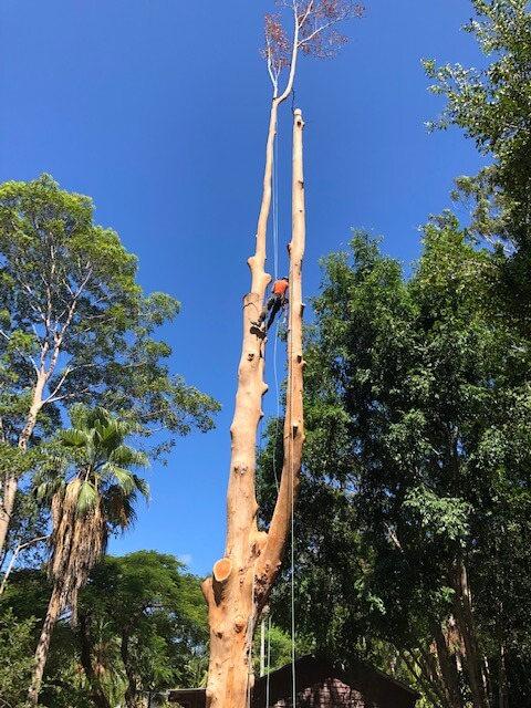 tree removal certified climber